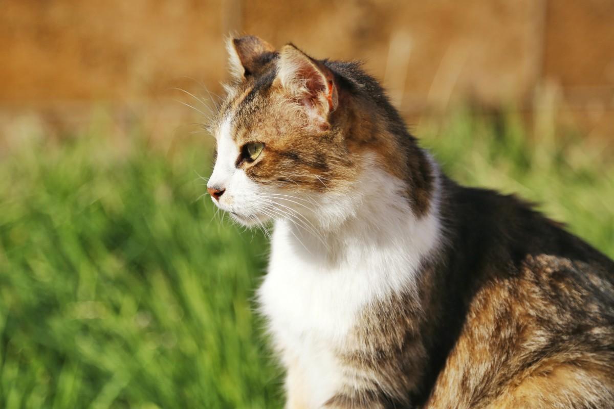 chat-perdu